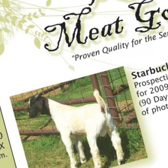 Kelly Meat Goats
